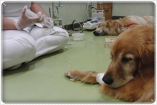 2010,7,4病院13