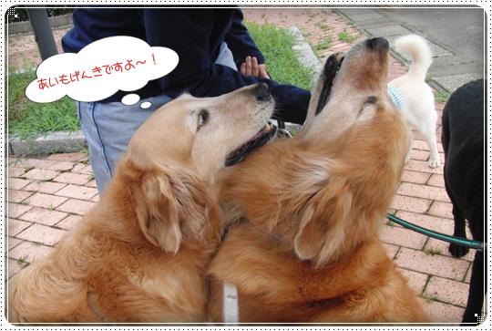 2010,7,5お散歩5
