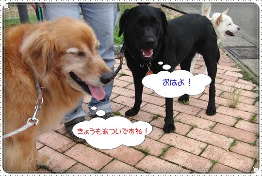 2010,7,5お散歩2