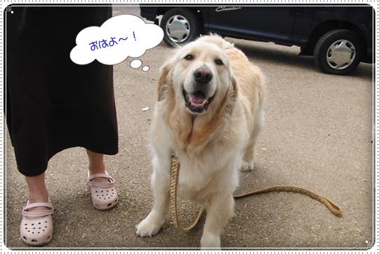 2010,7,5お散歩7