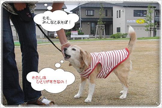 2010,7,6お散歩6