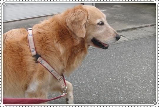 2010,7,6お散歩2