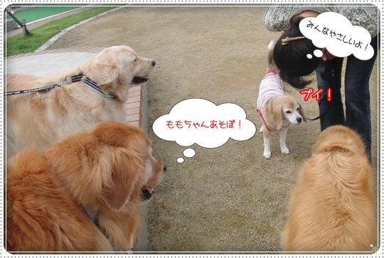 2010,7,6お散歩7