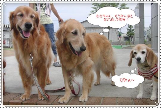 2010,7,6お散歩15