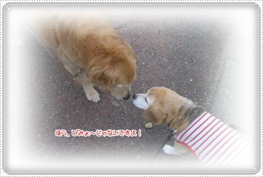 2010,7,6お散歩16