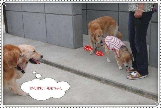 2010,7,6お散歩13