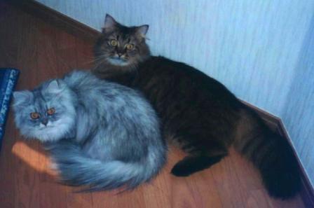 チャチャとキティ (1)