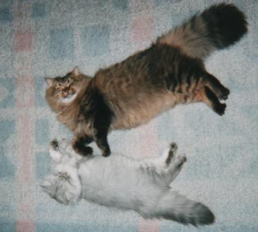 チャチャとキティ (4)