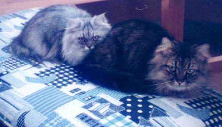 チャチャとキティ (2)