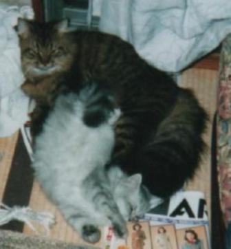チャチャとキティ (3)