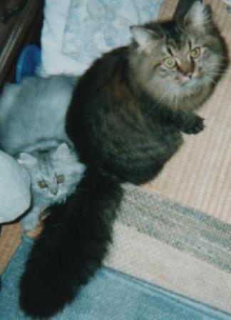 チャチャとキティ