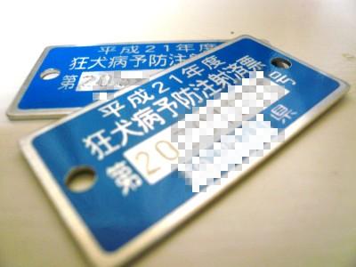 20090325.jpg