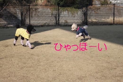 ひまちゃんMAX
