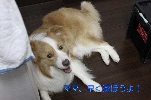 ストーカー犬