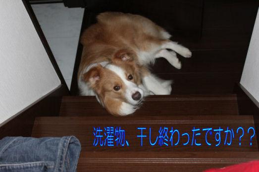 ストーカー犬2