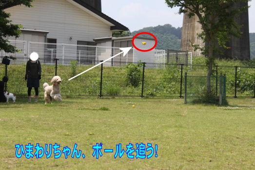 ひまわりボール遊び