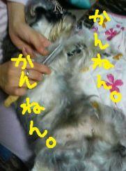 2009kyoufunomomo2