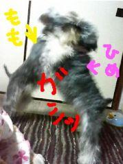 200812momohimegashi