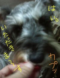 20090210momoichigo2-