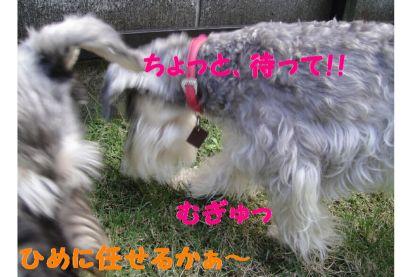 ももとひめとカマキリ(災難)