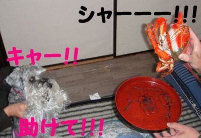 蟹VSひめ