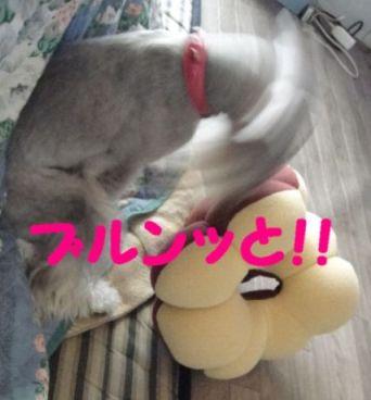 ポンデひめ4