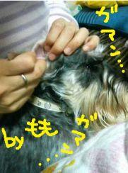 2009kyoufunomomo1