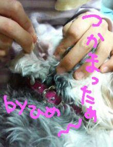 2009kyoufuno-3