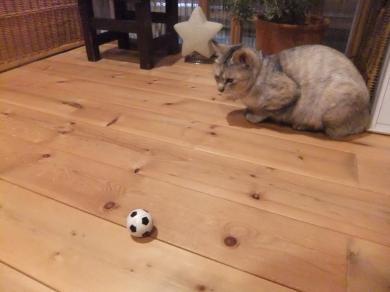 サッカーする?