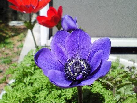 anemone09-2.jpg