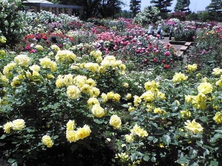 rosegarden09-1.jpg