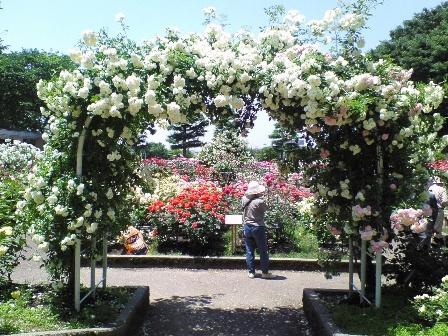 rosegarden09-2.jpg