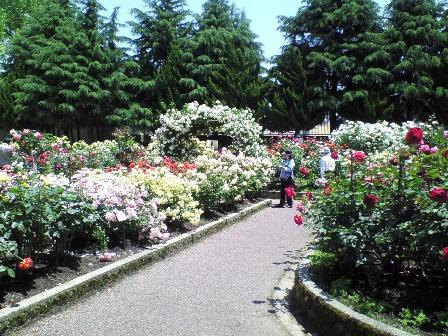 rosegarden09-3.jpg