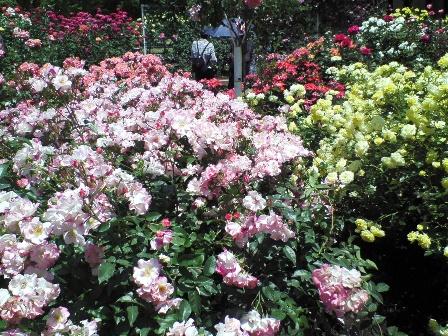 rosegarden09-4.jpg