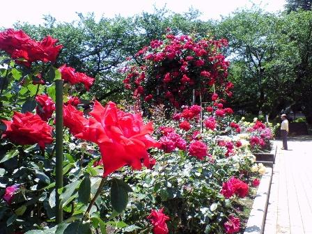 rosegarden09-5.jpg