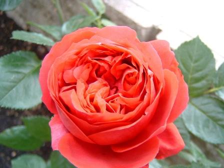 rouge6.jpg
