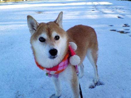 snow2_20081207234843.jpg