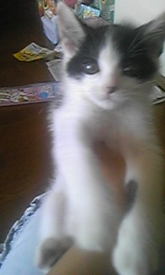 子猫にゃん
