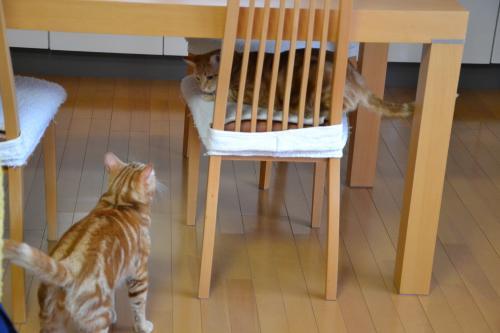 もちろんテーブルの下