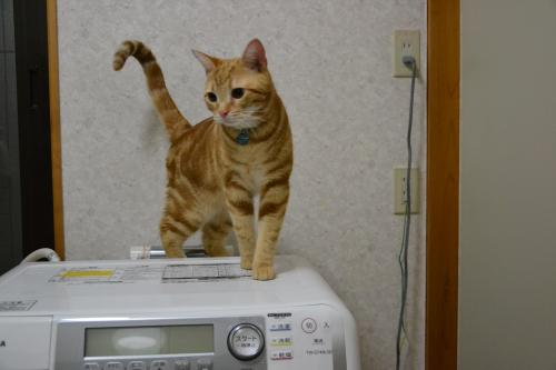 洗濯機に乗るルカ
