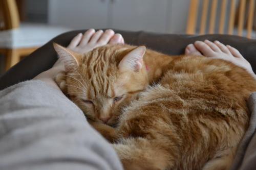 足元で眠るリンリン