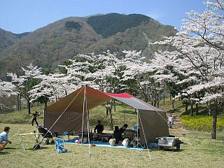 2005-4-ohanami-1.jpg