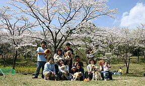 2005-4-ohanami-2b.jpg