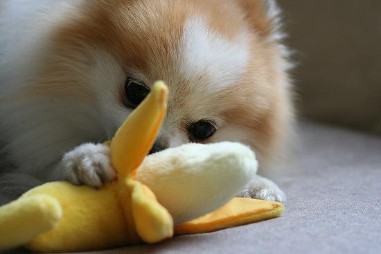 ダンディとバナナ