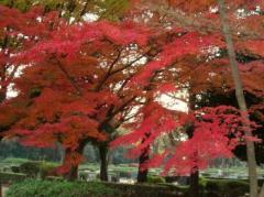 小平霊園の紅葉