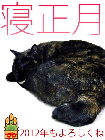 猫ブログ 人気