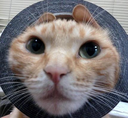 人気 猫ブログ 4匹の猫