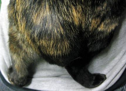 4匹の猫友 人気猫ブログ