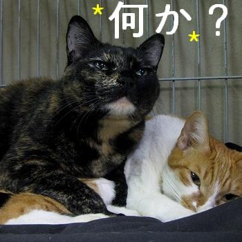 4匹の猫友