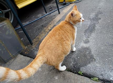人気 猫ブログ